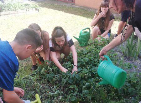 Opole School Garden